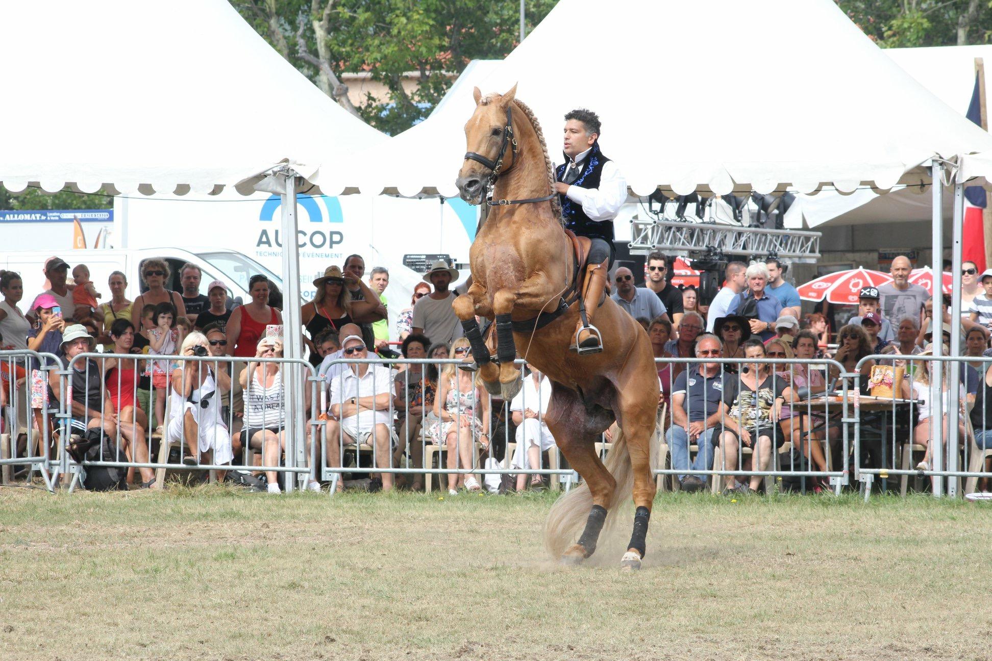 Fête du cheval à Levens-aucop-evenement-fete du cheval-levens-sonorisation-eclairage-location-materiel-audiovisuel-amsl equitation-carros-nice-marseille-paris-equitation