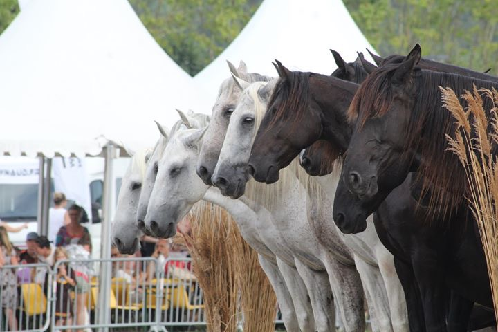 aucop-evenement-fete du cheval-levens-sonorisation-eclairage-location-materiel-audiovisuel-amsl equitation-carros-nice-marseille-paris-french riviera