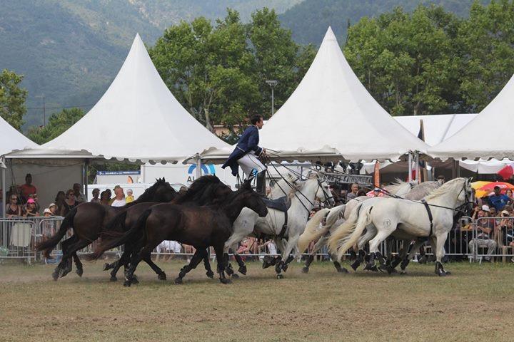 Fête du cheval à Levens-aucop-evenement-levens-fete du cheval-sonorisation-eclairage-location-materiel-audiovisuel-nice-marseille-paris