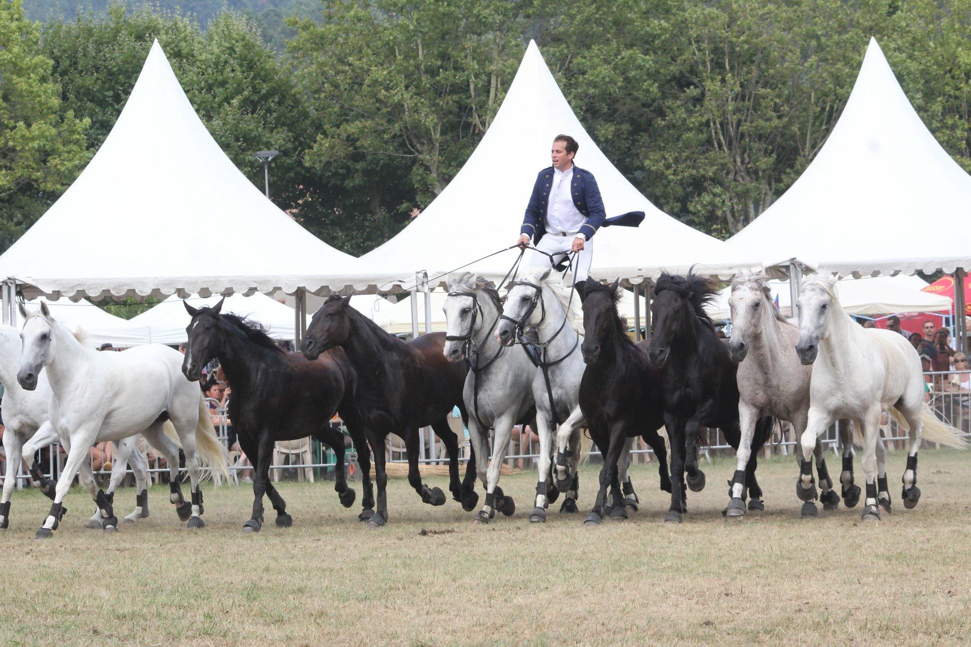 aucop-sonorisation-eclairage-location-materiel-audiovisuel-amsl equitation-carros-nice-marseille-paris-son-lumieres-evenement-fete du cheval-levens